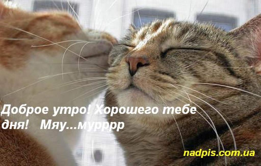 доброе утро с котиками картинки