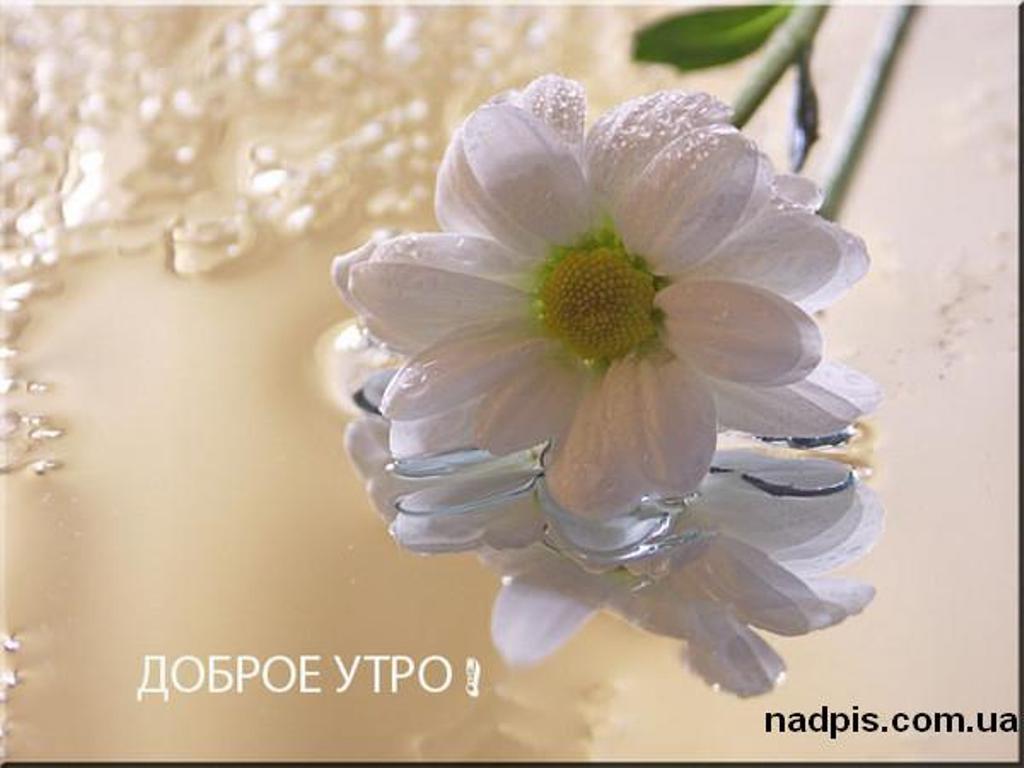 | Картинки с надписями, прикольные ...: nadpis.com.ua/category/dobroe-utro/page/7