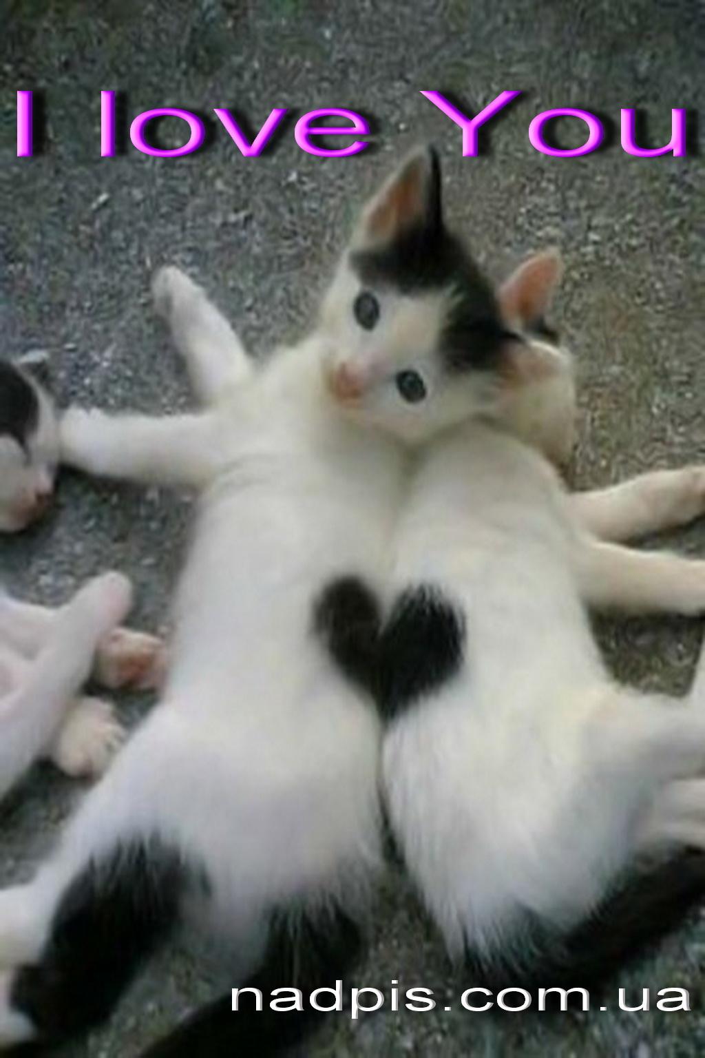 Котята с сердечком