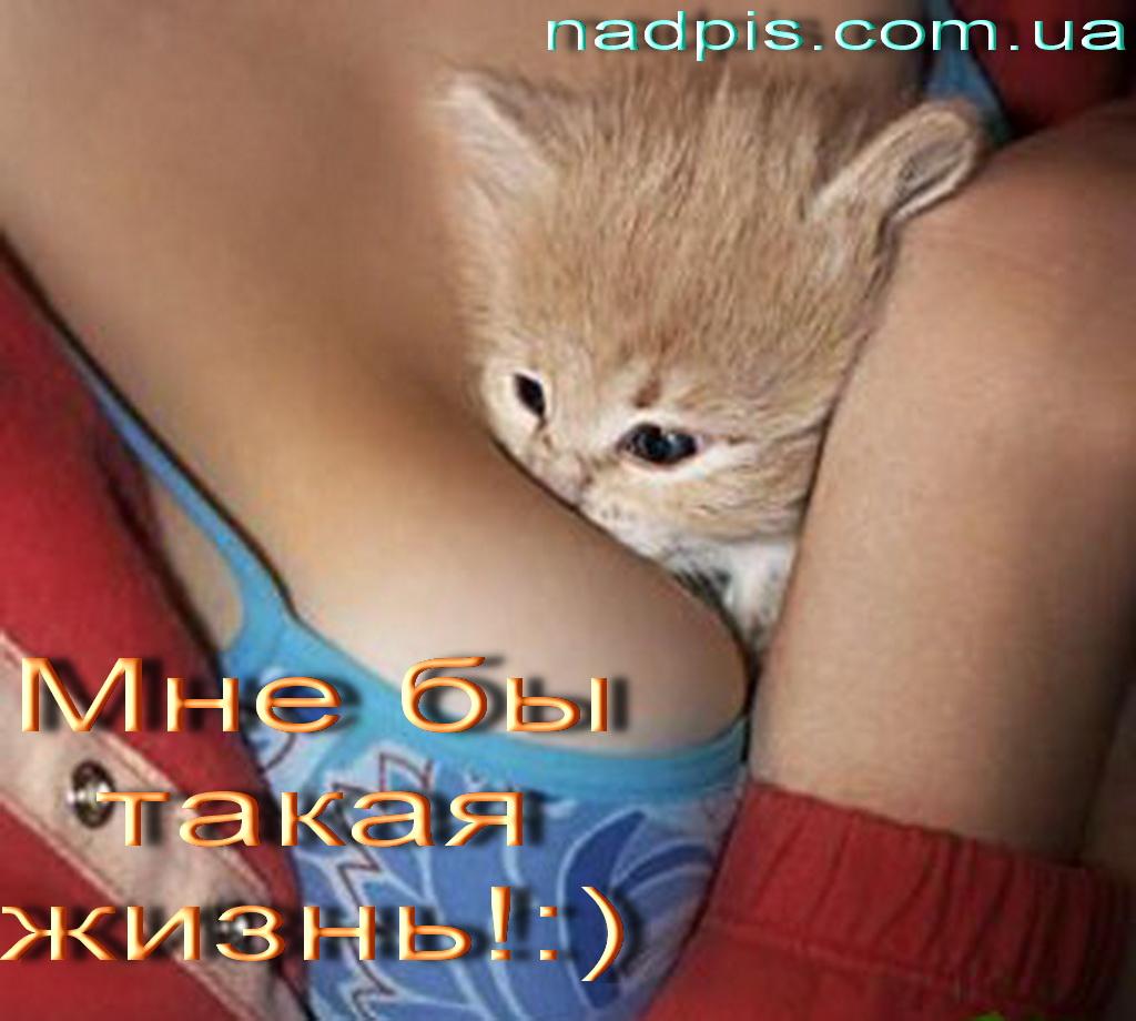 Котёнок на женской груди
