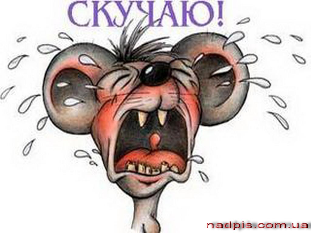 Плачущая мышь скучает
