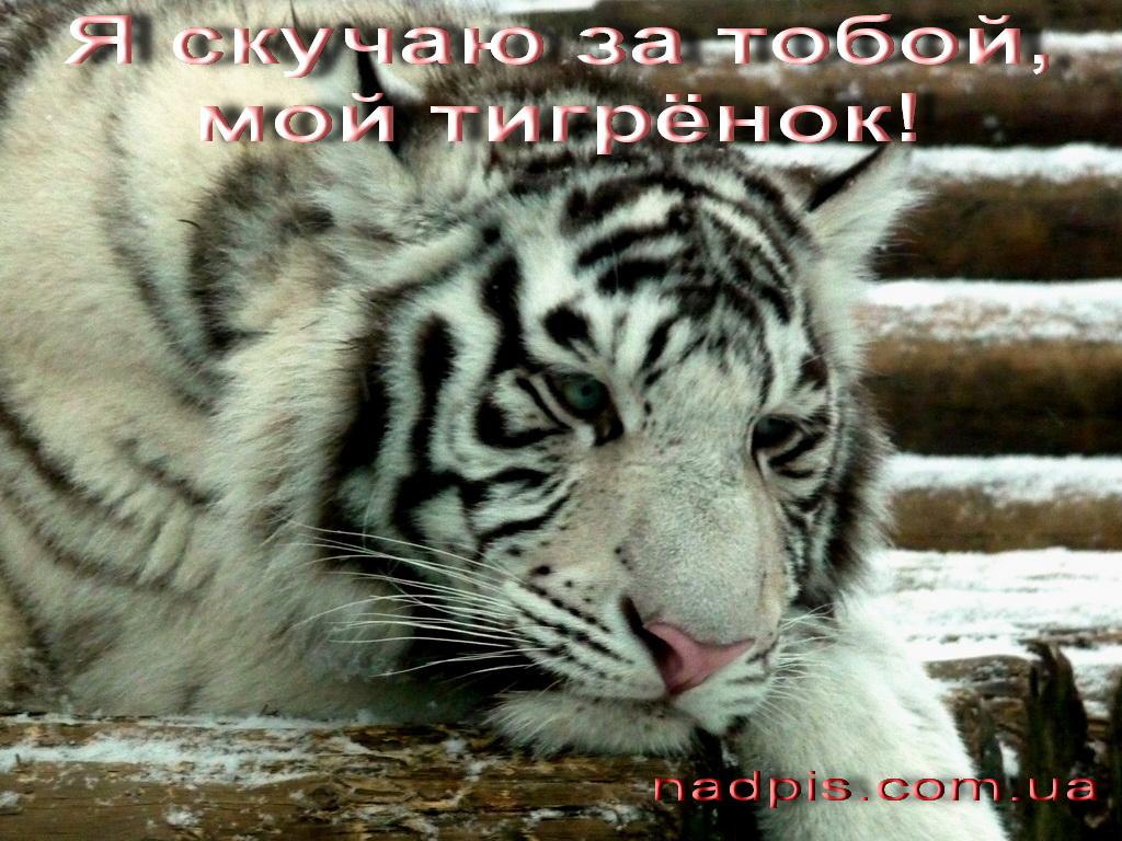 Скучаю за тобой, мой тигрёнок