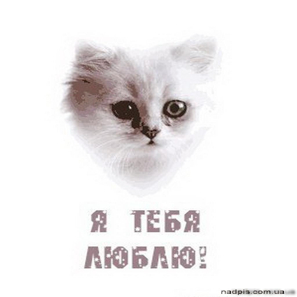 Котёнок говорит о любви