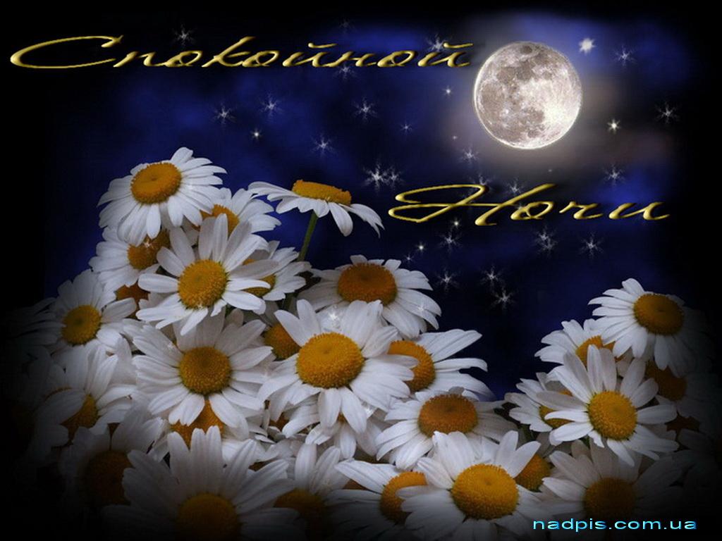 Спокойной ночи с ромашками