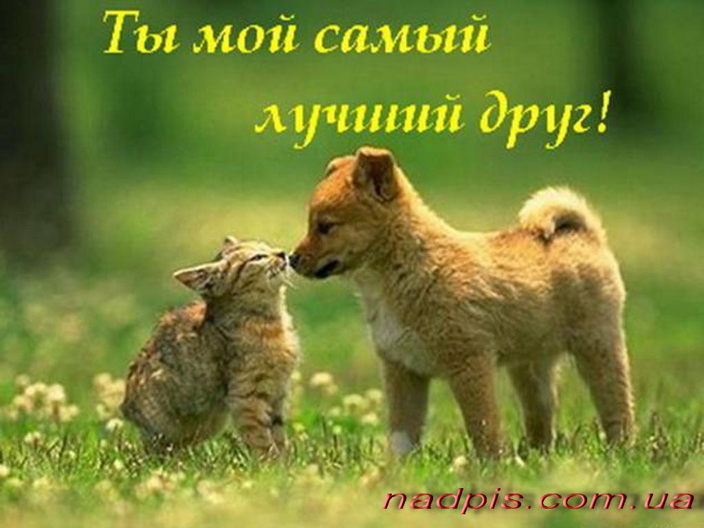 Ты мой самый лучший друг
