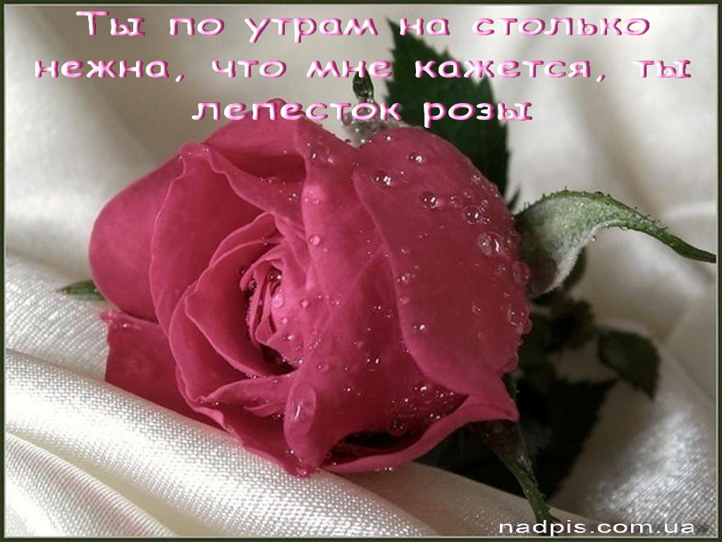 Ты нежна, как лепесток розы