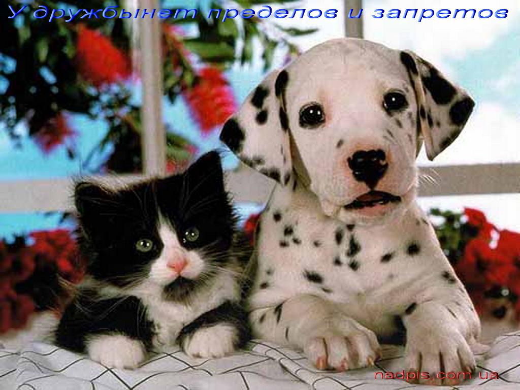 У дружбы нет запретов