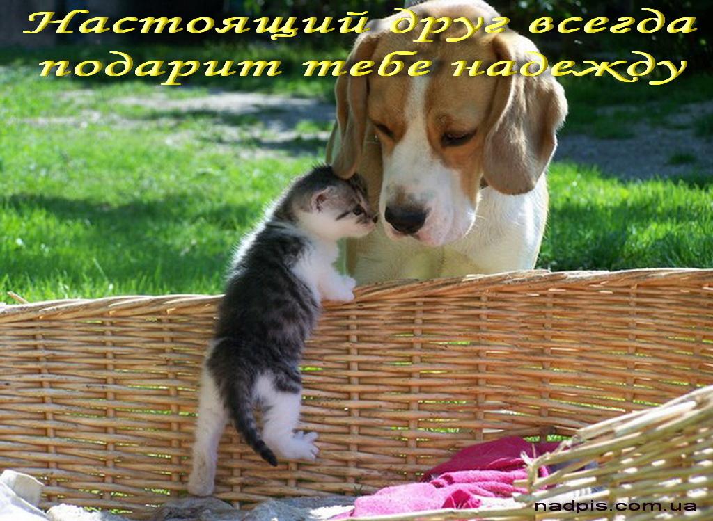 Друг всегда подарит надежду