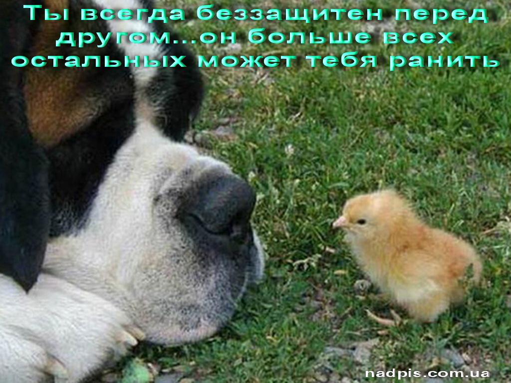 Ты беззащитен перед другом