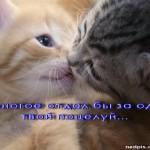 Многое отдал за поцелуй