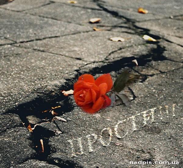 Прости на фоне розы