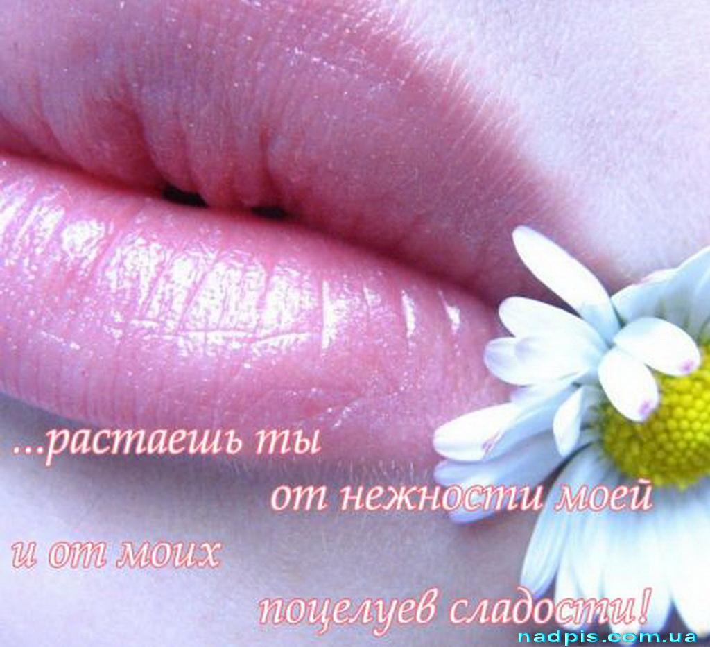 | Картинки с надписями, прикольные ...: nadpis.com.ua/category/pocelui/page/2