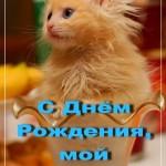 С Днём Рождения, мой котёнок